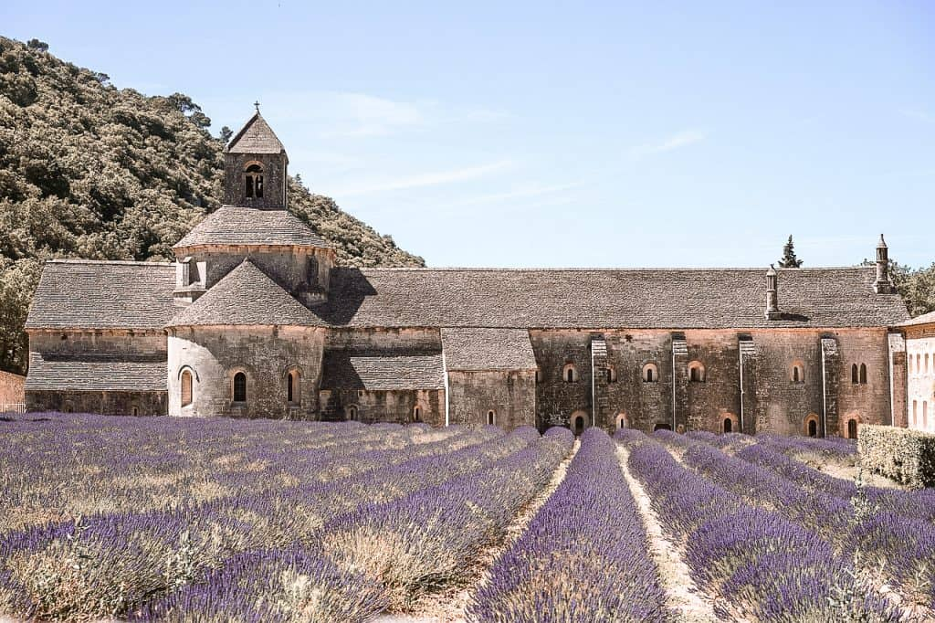 Avignon France abbey and lavender field